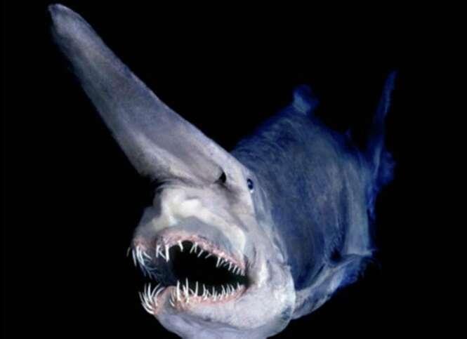 Imagens incríveis relacionadas aos oceanos
