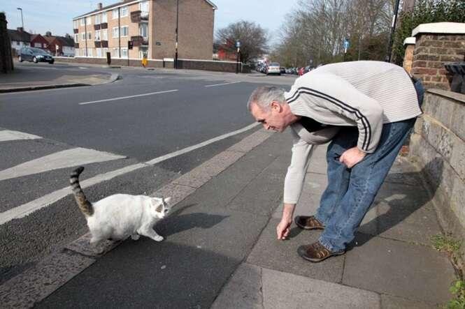 """Gato com obesidade mórbida é forçado a usar coleira com frase: """"Por favor, não me alimente"""""""