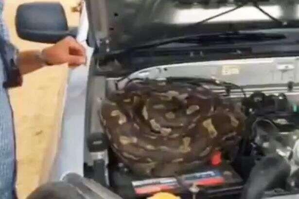 Motorista escuta ruído em seu carro e encontra cobra no motor