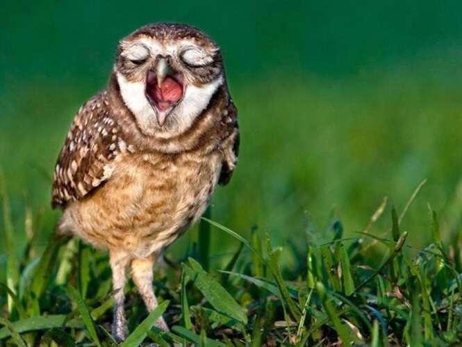 Imagens de animais que vão fazer você bocejar