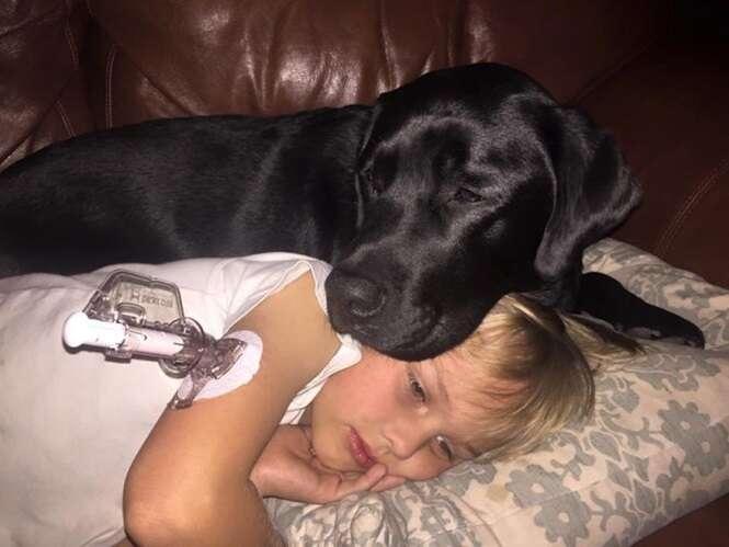 Cão salva a vida de menino diabético