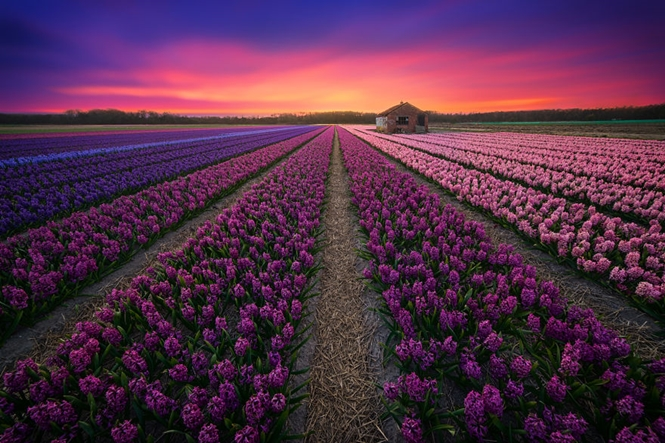 Fotos que vão fazer você querer visitar a Holanda