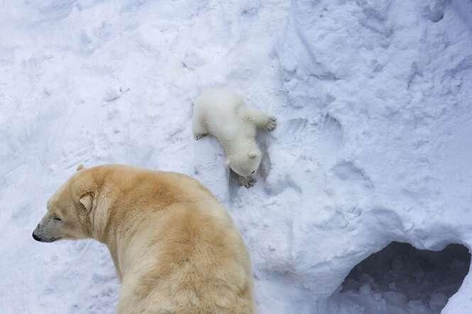 Mamãe ursa é fotografada brincando com seu bebê