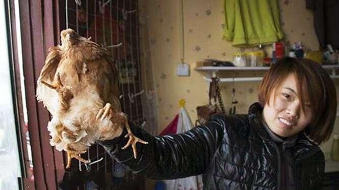Galinha de quatro patas aparece em fazenda na China