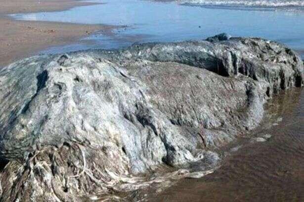 Criatura misteriosa surge em praia mexicana e intriga especialistas