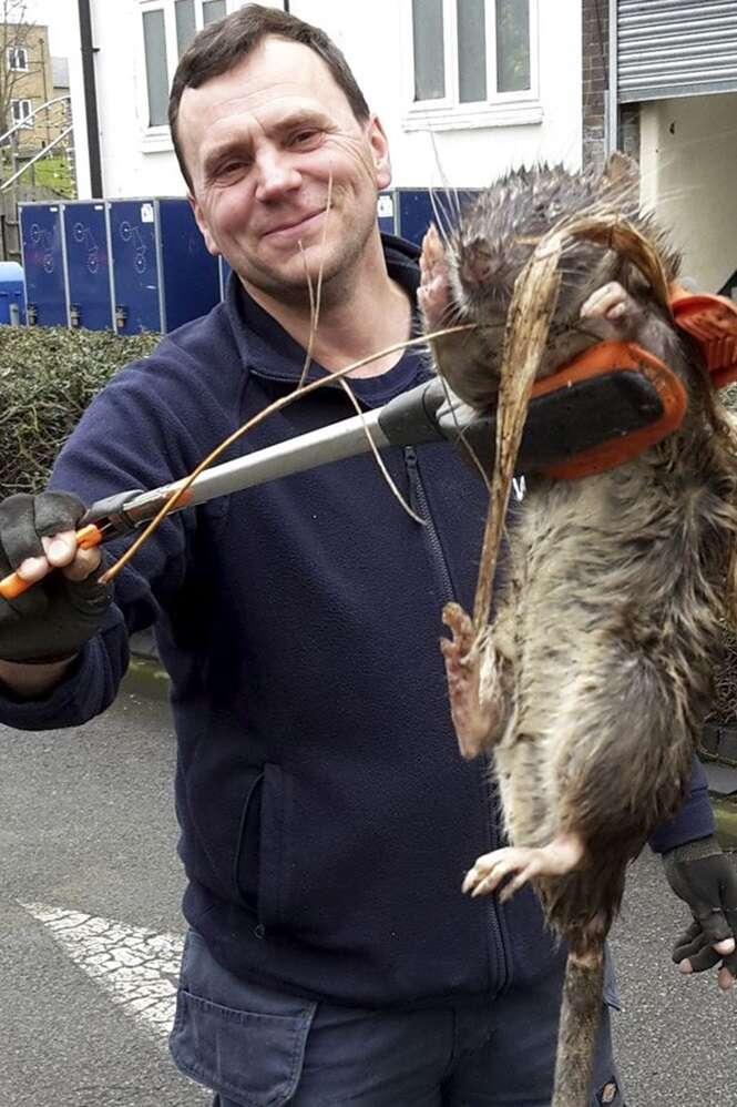 Homem encontra rato enorme ao lado de parque infantil
