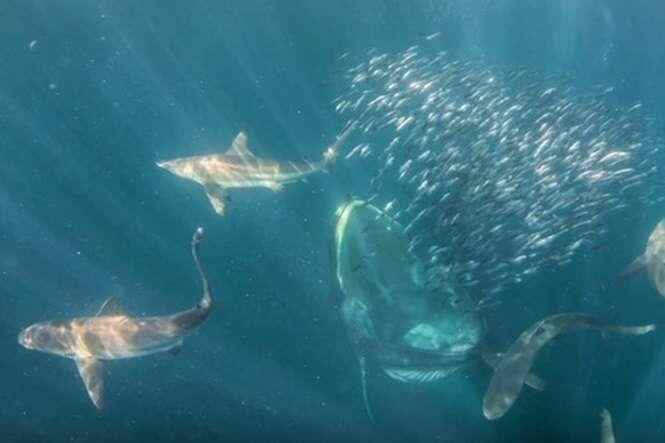 Mergulhador filma momento em que quase é engolido por enorme baleia