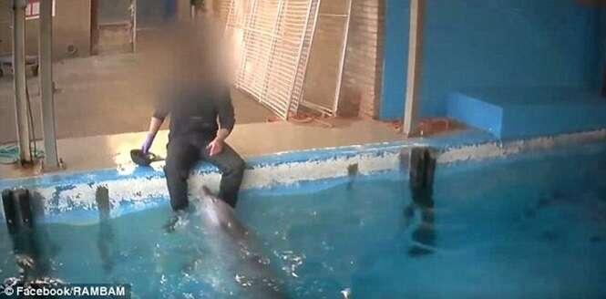 Funcionário é filmado realizando ato íntimo com golfinho