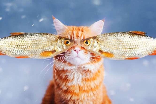 Gatinho faz sucesso com belas imagens na internet