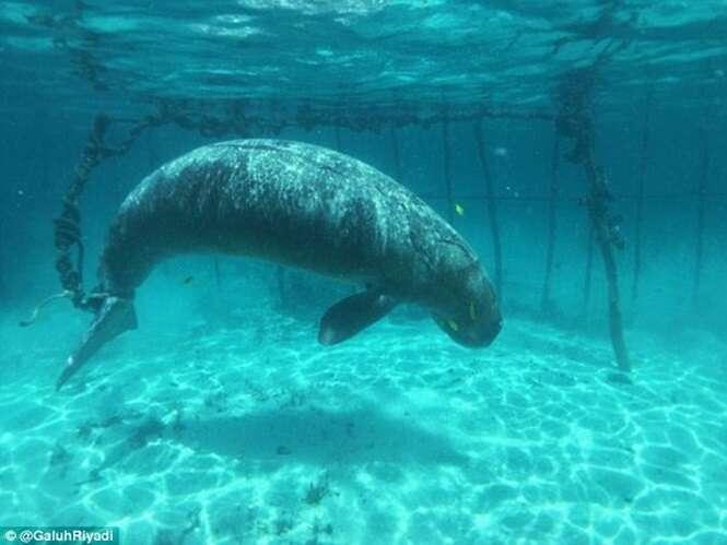 Enorme mamífero marinho é acorrentado e mantido longe de seu filhote