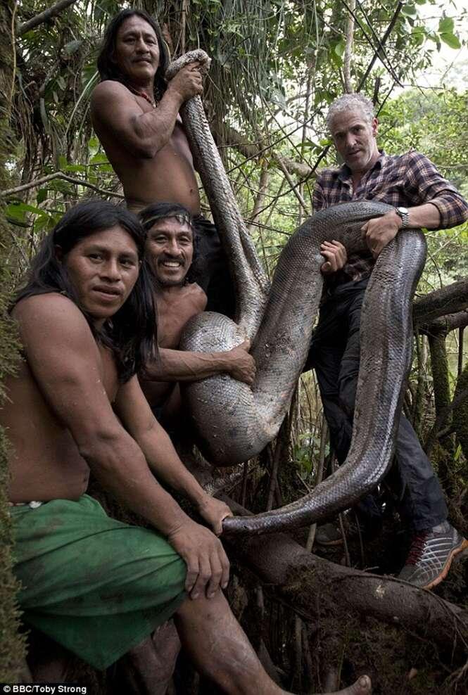 Vídeo flagra maior cobra do mundo capturada à mão na selva amazônica