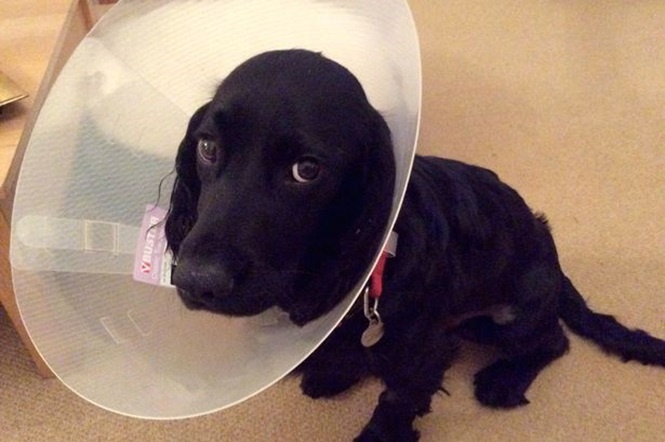 Cachorro quase explode após comer tubo de cola industrial