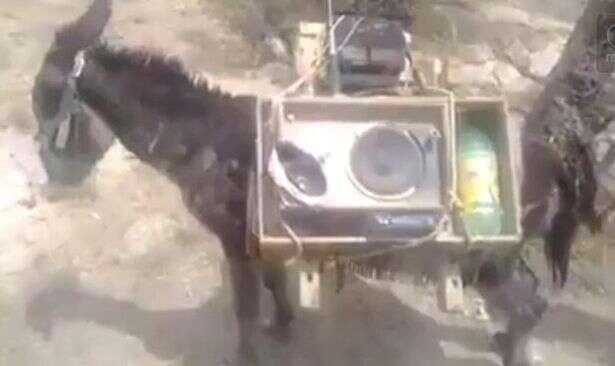 Vídeo de burro desnutrido sendo usado para transportar equipamento de som pesado revolta internautas