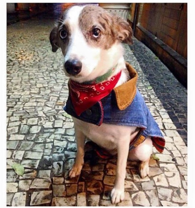 Cachorrinha é chamada de petista e acaba sendo hostilizada