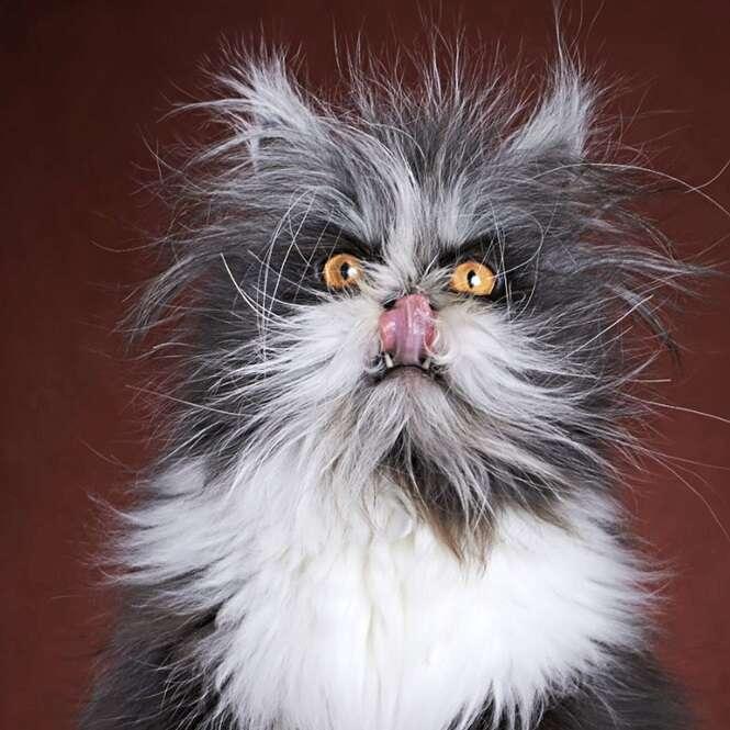 Gato lobisomem se torna sensação após ter imagem postada na web
