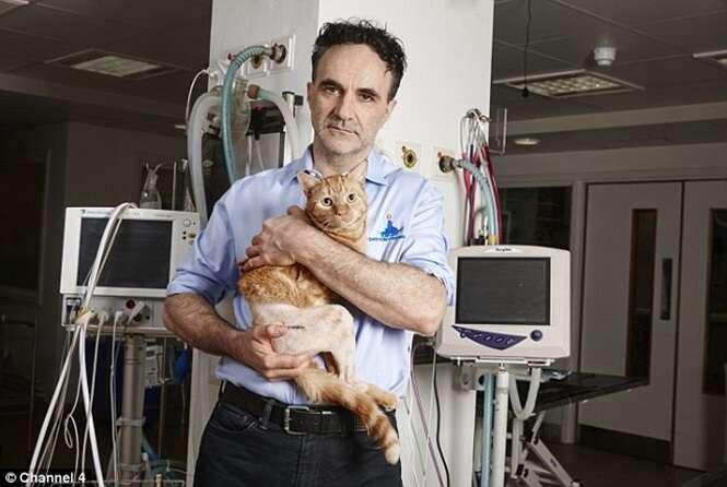 Gato patas passa por cirurgia e tem quadril totalmente substituído
