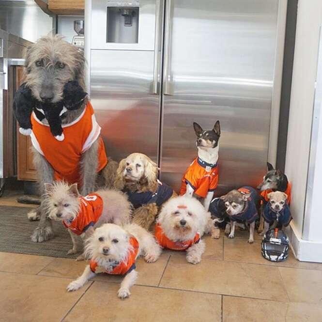 Homem dedica sua vida a adoção de cães