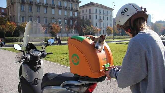 Empresa pensa nos animais ao criar modelo de caixa transportadora de cães para motos
