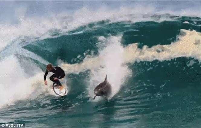 Golfinho pega onda ao lado de surfista
