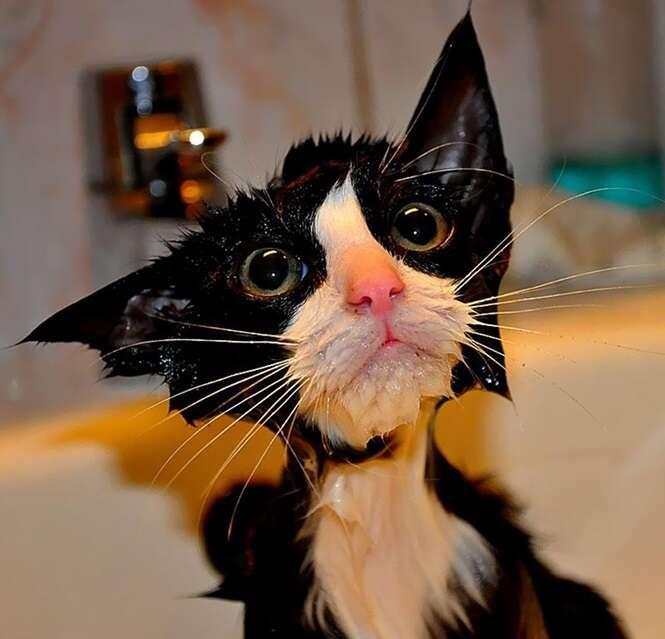 Fotos de gatinhos sofrendo com a hora do banho