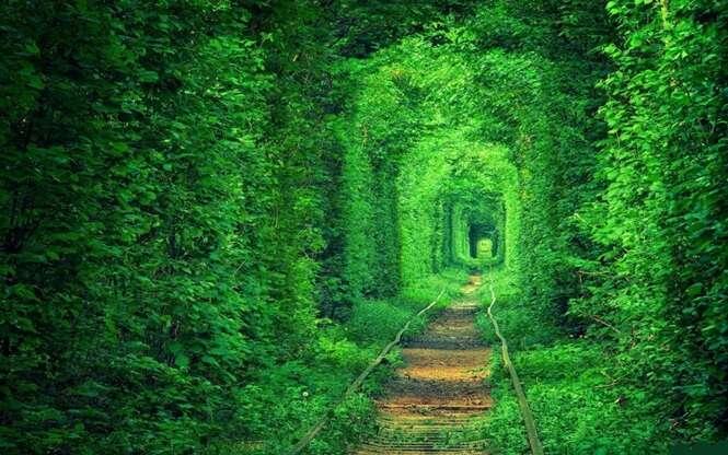 Os mais belos túneis formados por árvores