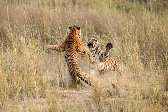Foto: Archna Singh