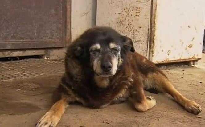 """Cão mais velho do mundo morre com """"200 anos"""" de vida"""