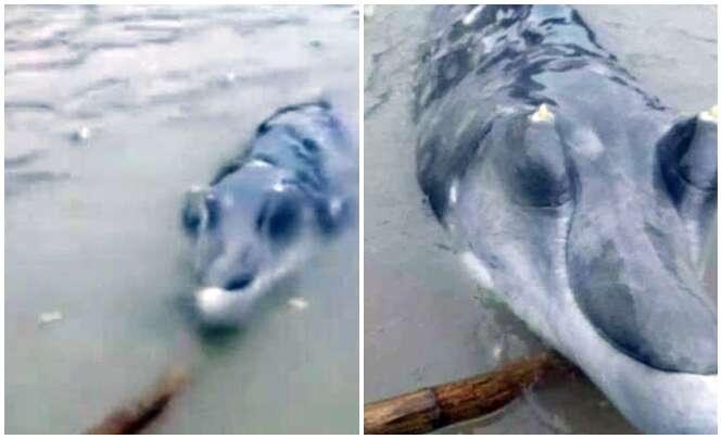 Misteriosa criatura marinha com longa tromba deixa pescadores confusos