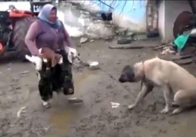 Vídeo é chamado de pecaminoso ao mostrar cadela amamentando cabritinhos famintos