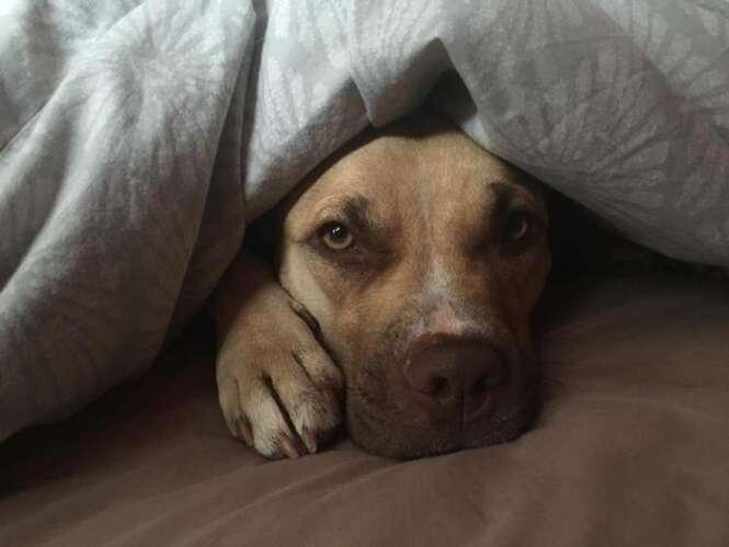 Cão aterrorizado após ser abandonado por donos passa dois dias encolhido na gaiola