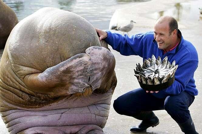 Animais tendo uma festa de aniversário melhor que a sua