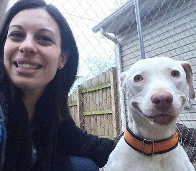 Cão Pit Bull abandonado que foi encontrado quase morto agora não para de sorrir