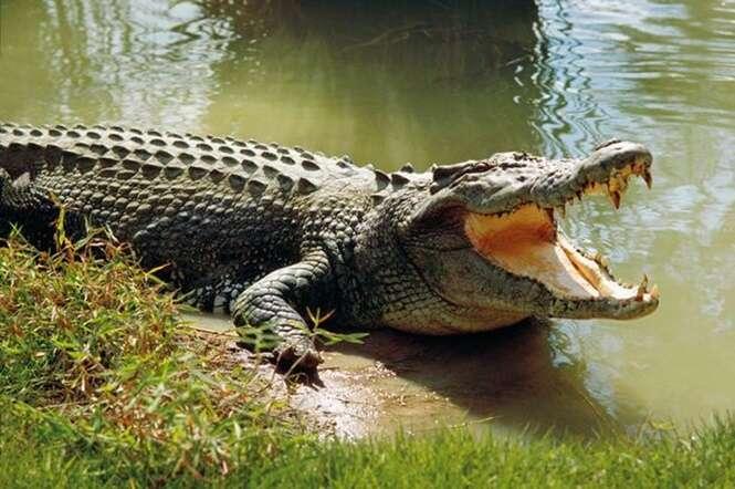 Crocodilo morde pé de jovem que acampava próximo à rio
