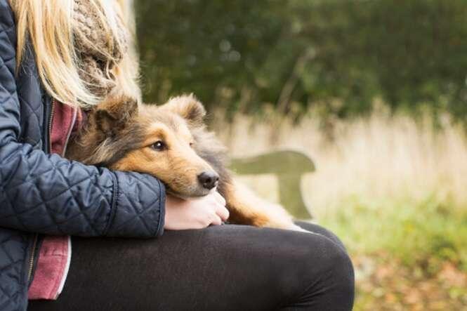Sinais de que seu cão realmente te ama