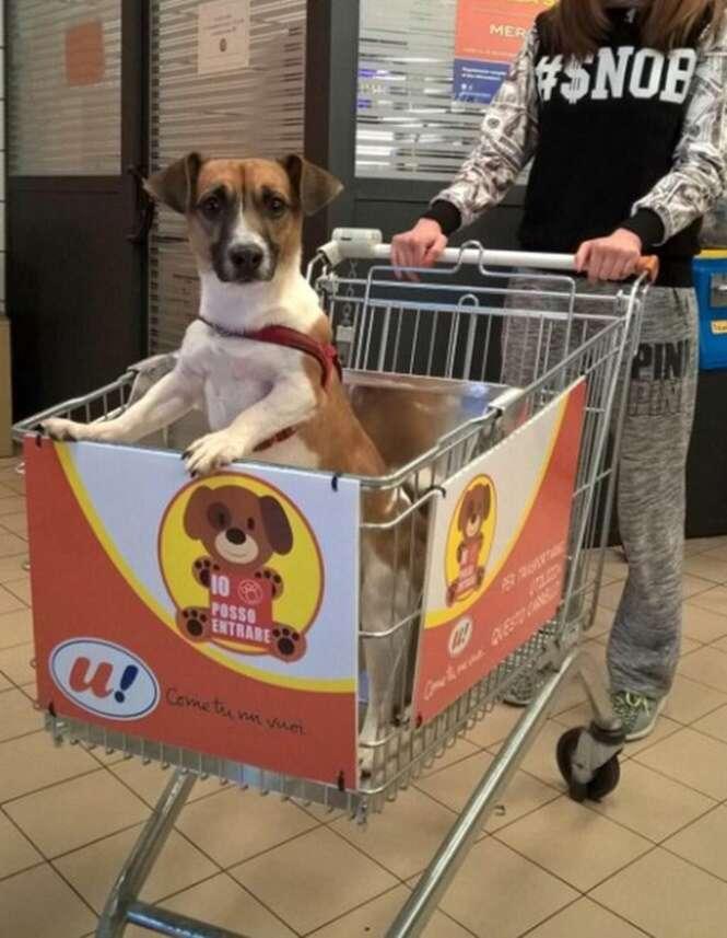 Supermercado inova com carrinhos de compras especiais para seu cãozinho