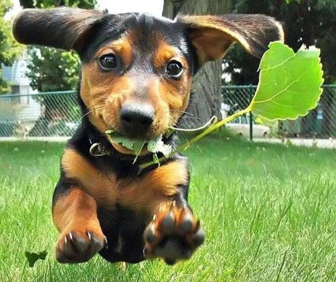Fotos fofas de animais para melhorar seu dia