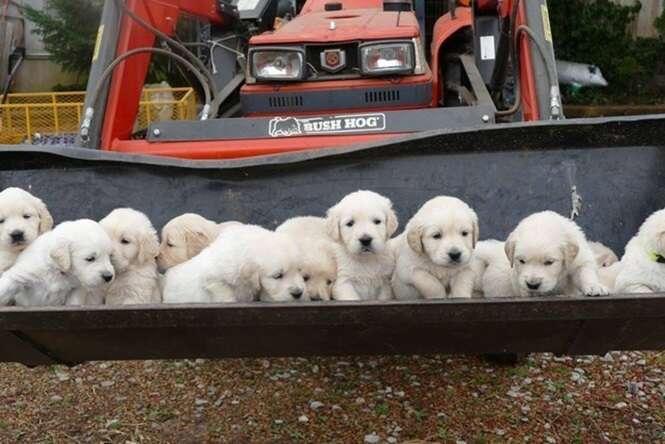 Lindas fotos de filhotes de cachorros