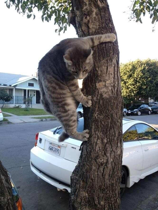 Gatos que são verdadeiros ninjas