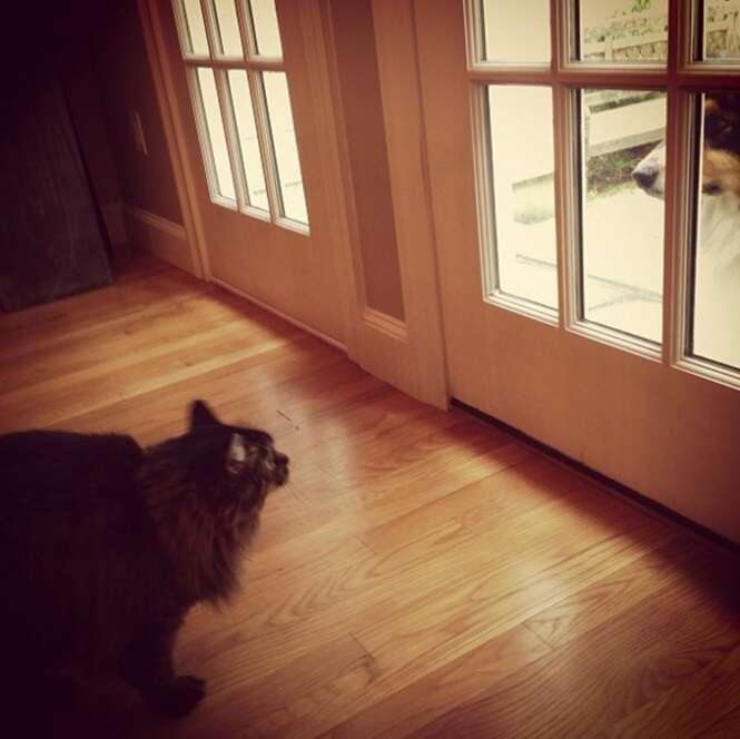Fotos curiosas de gatos e cachorros de lados opostos da porta