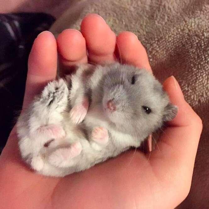 Fotos fofas de hamsters