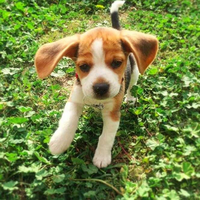 Fotos fofas de filhotes de cachorro
