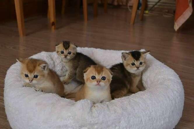 Fotos fofas de gatinhos