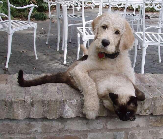 Belas fotos da amizade entre cães e gatos