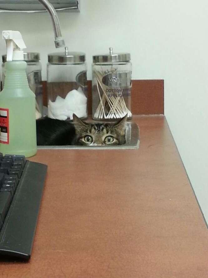 Gatos que fazem de tudo para se esconder do veterinário