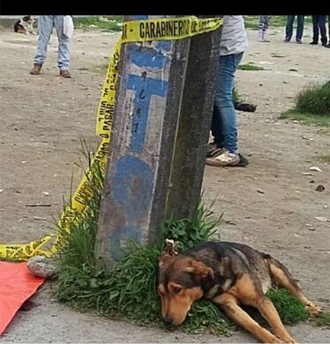 Cão é flagrado com semblante de dor enquanto fica deitado ao lado de dono morto em acidente
