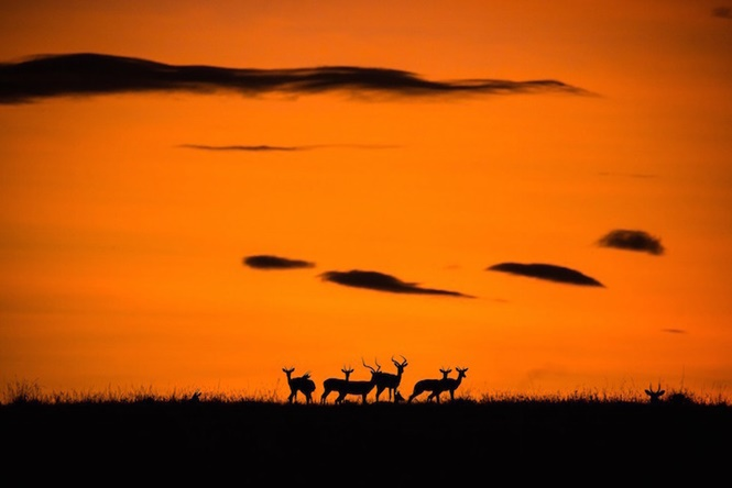 Foto: Kellie Netherwood - National Geographic Travel Photographer of the Year Contest