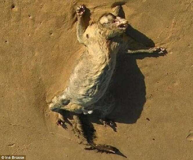 Foto de estranha criatura encontrada em praia na Austrália gera debate na web