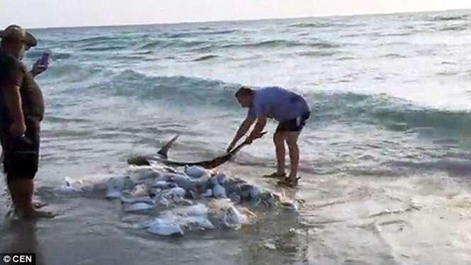 Homem de bom coração salva tubarão encalhado em praia