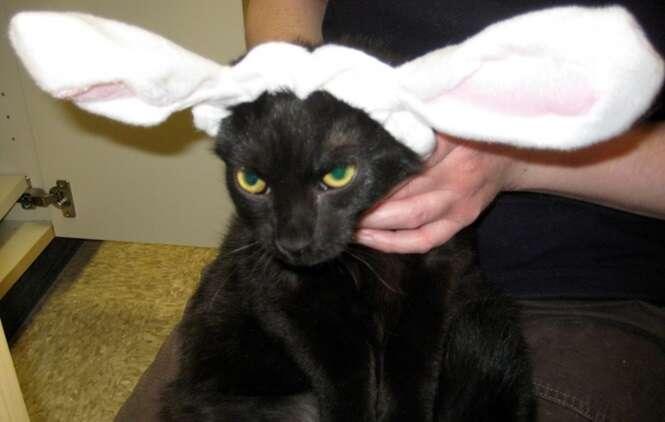 Imagens hilárias de animais durante a celebração da Páscoa