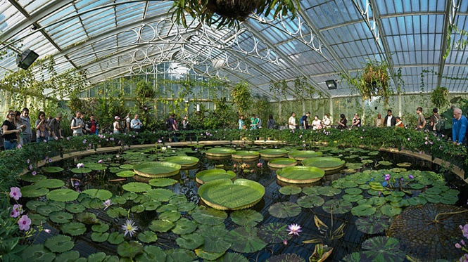 Foto: kew gardens